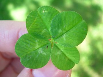 Large-clover_13943_360x270