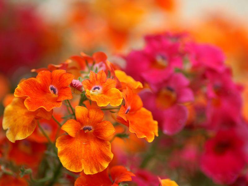 Flower_photo-5