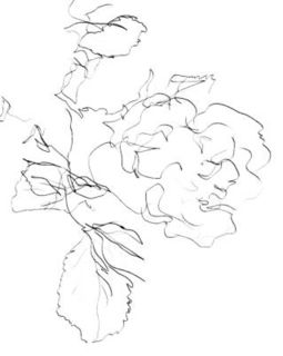 Blind-contour-rose