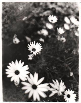 Film flower