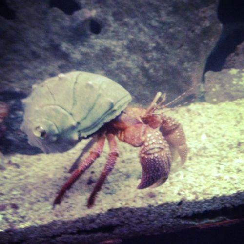 Zoo-HermitCrab