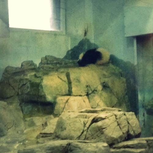 Zoo-BaoBao