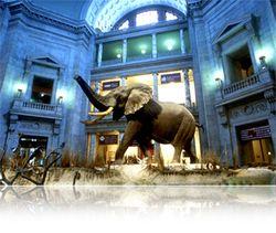 Elephant in Rotunda