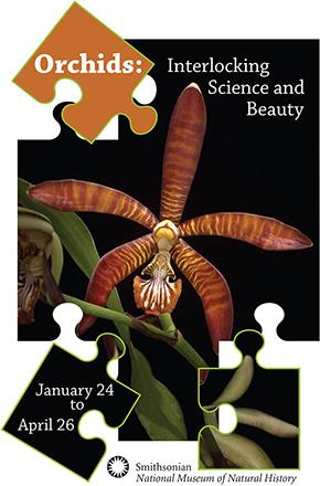 Orchids-interlocking-logo-290